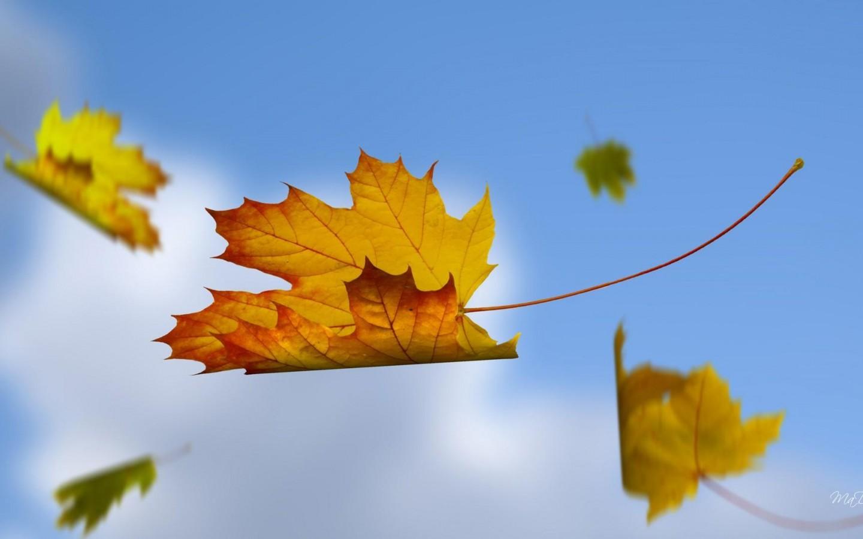 Cadute creativitá e un vento di cambiamento